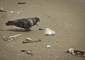 falta de limpieza propicia plagas de palomas