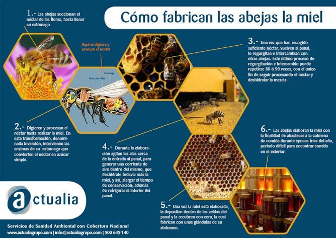 infografía de cómo fabrican las abejas la miel