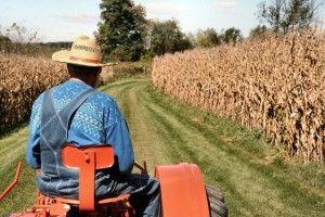 agricultor en tractor aplica fertilizantes a su cosecha