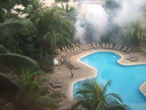 desinfectar y desratizar en zona de piscina de hotel