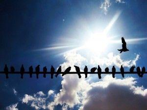 hilera de plaga de palomas sobre una cuerda
