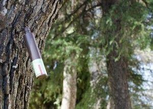 técnica de inyección para prevenir procesionaria del pino