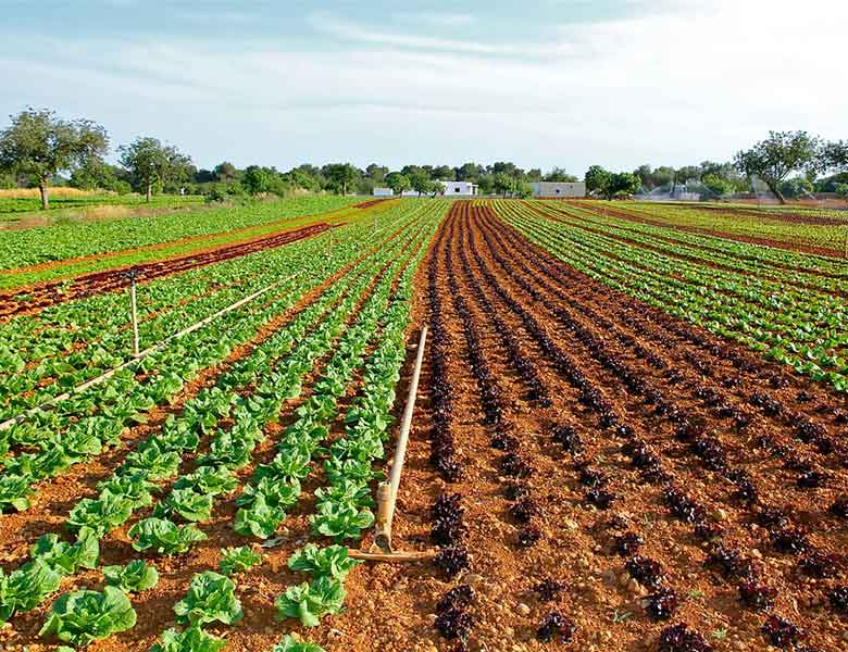asesoramiento legal en productos fertilizantes agrícolas
