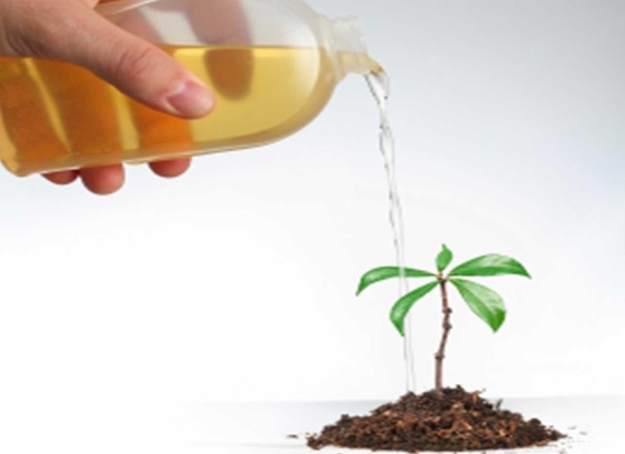 asesoramiento de fertilizantes para mejorar la producción
