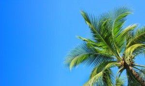 palmera en un cielo azul