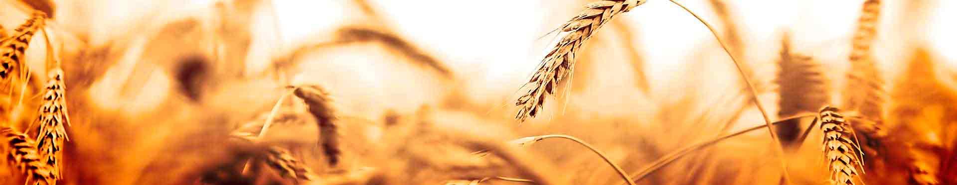 servicio de consultoría en globalgap para la agricultura