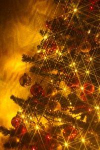 árbol de Navidad puede contener plagas de insectos