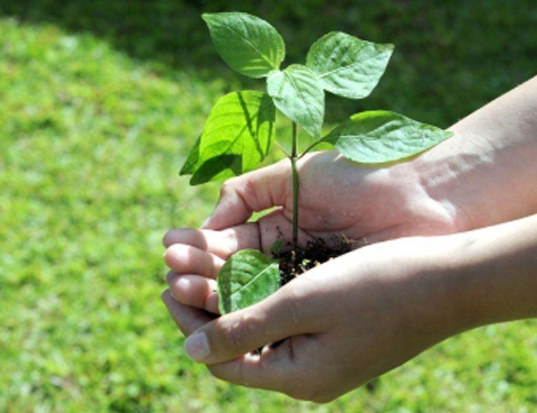 ofrecemos diagnóstico ambiental para mejorar el entorno