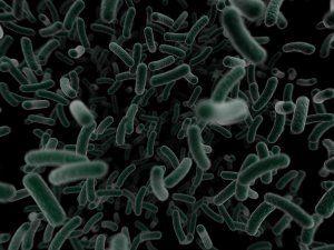 bacteria legionella en imagen en negativo