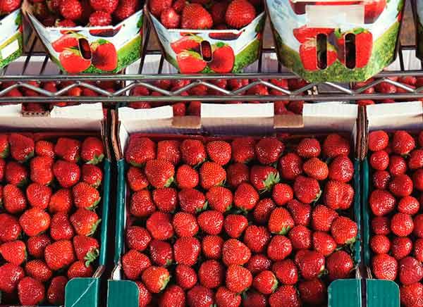 Proveedores de fresas obtiene el certificado IFS Broker