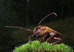 elimina la presencia de cucarachas en el jardín