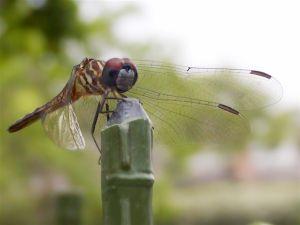 presencia de insectos en el jardín