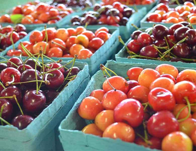 cerezas obtenidas con productos fertilizantes