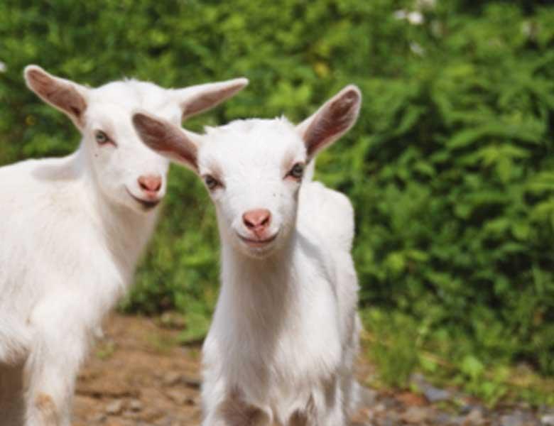 Implantación del referencial FAMI-QS en la ganadería