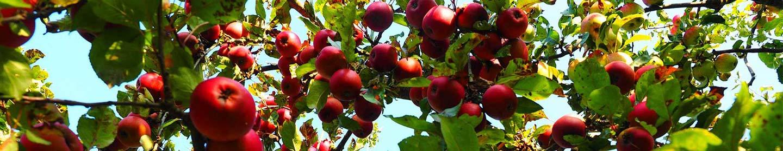 asesoramiento de productos fertilizantes en manzanos