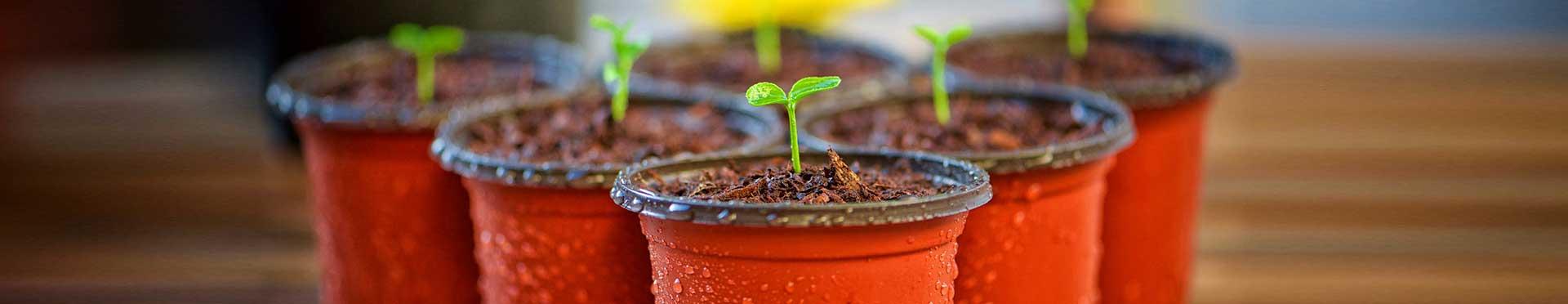 brotes en las macetas gracias a los fertilizantes