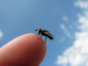 presencia de mosca en ambientes exteriores