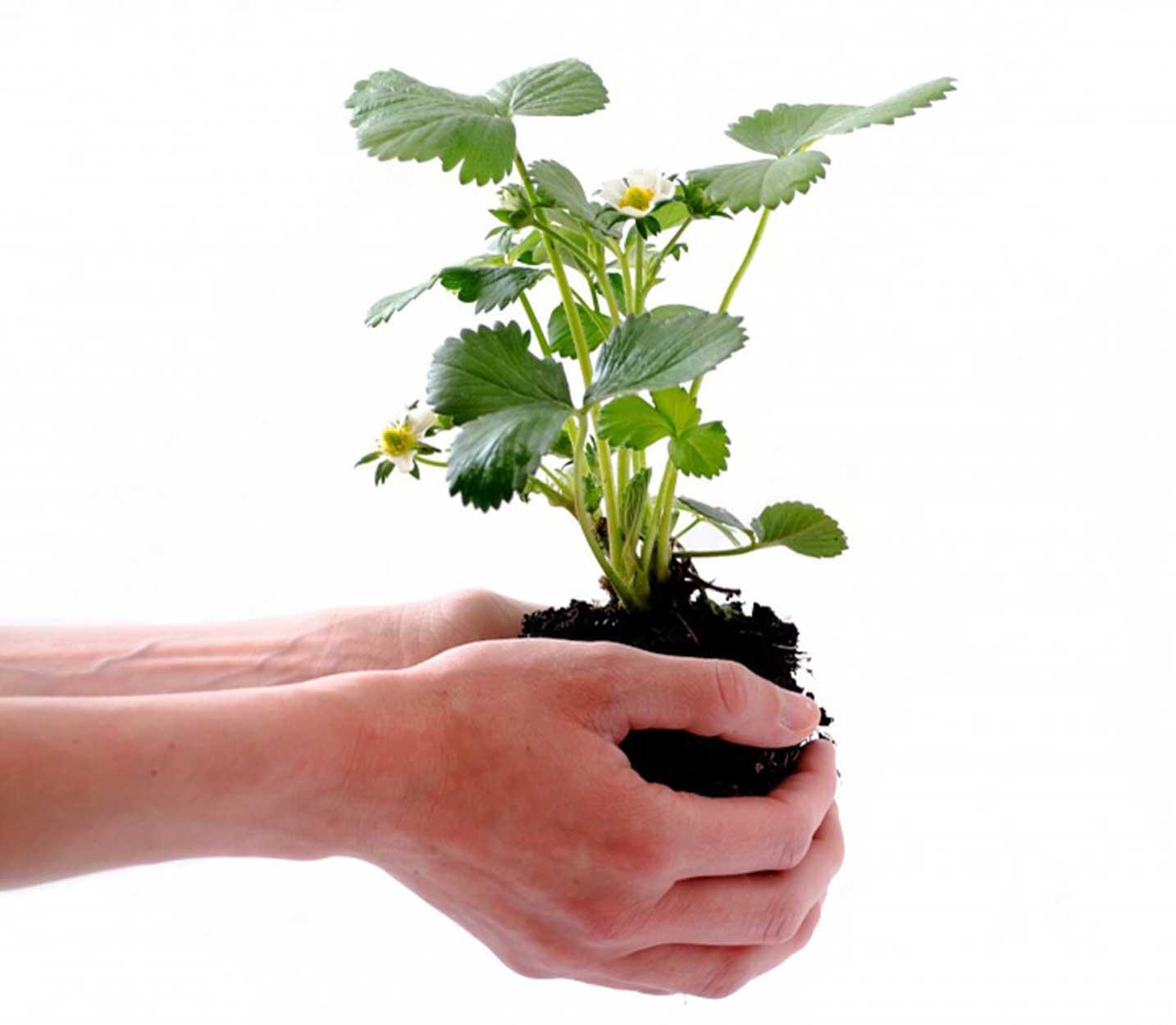 ofrecimiento de la planta para mejorar el medio ambiente