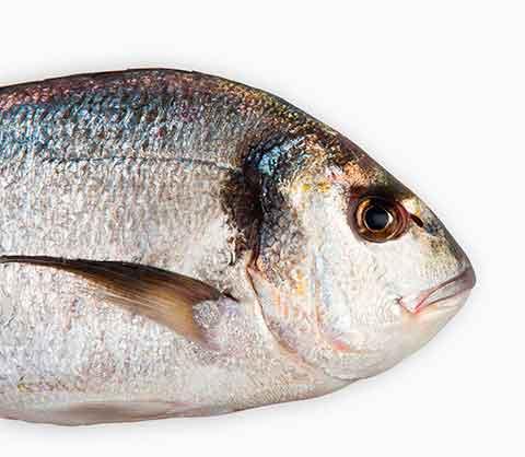 inscribir el pescado en el registro alimentación animal