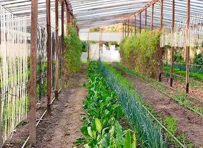 Invernadero de alimentos con la obtención del Gobalgap