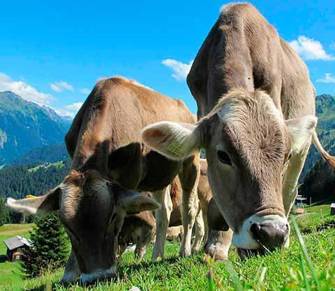 Metodología de registro de alimentación animal vacuno