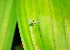 insectos en zonas ajardinadas