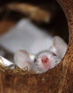 presencia de roedores en pequeños agujeros