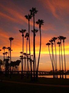 anochecer en costa con palmeras