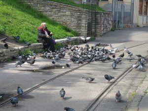Dar de comer a las palomas conlleva sanción económica