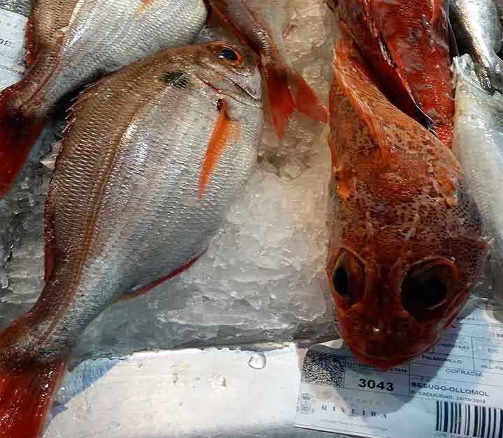 Pescadería expuesta a inspección en Sanidad Alimentaria