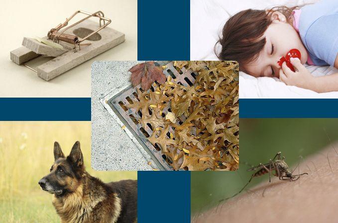 collage de los servicios de control de plagas