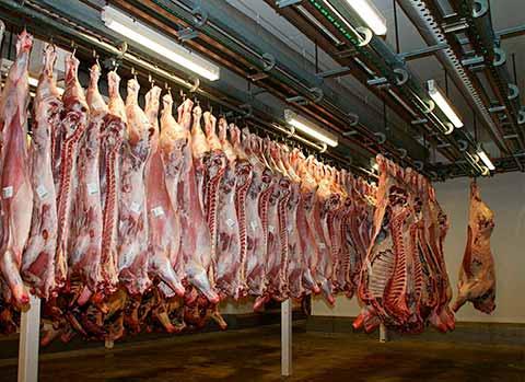 matadero de productos cárnicos para exportar