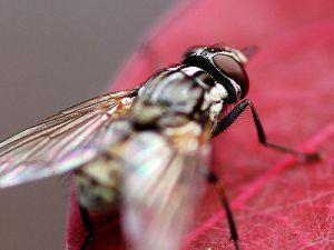mosca posada en las hojas de las plantas del hogar