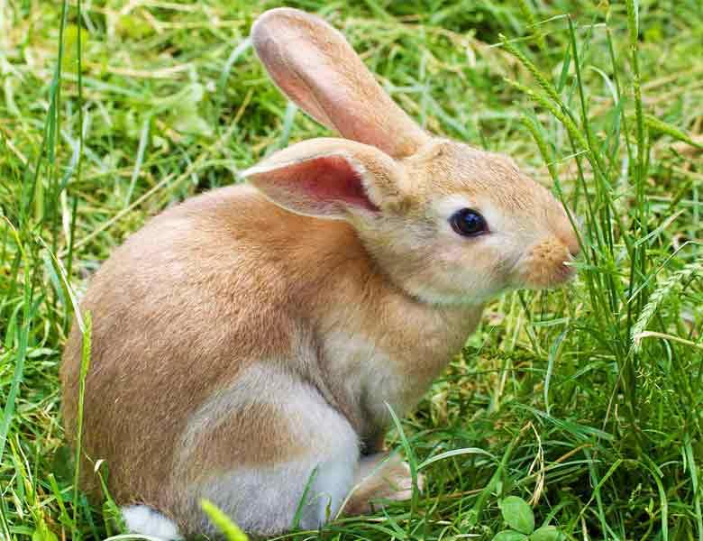 registro empresas de alimentación animal como el conejo