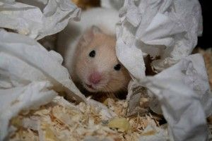 identificar plagas de roedores