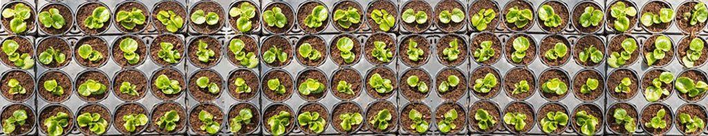 macetas plantadas con fertilizantes de enmienda orgánica