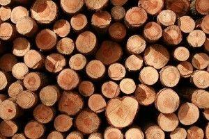 el uso de madera y el medio ambiente de las empresas