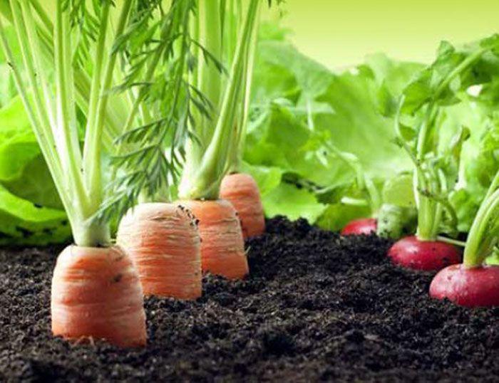 asesoramiento de productos fertilizantes para la huerta