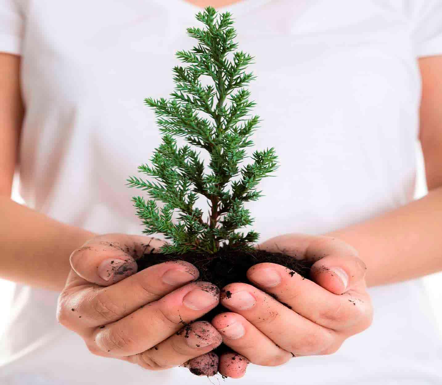 plantar un árbol como compromiso con el medio ambiente