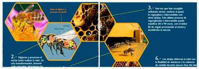 infografía abejas y producción de miel
