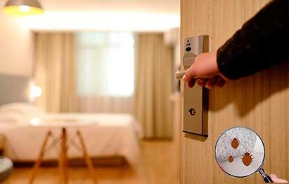 cómo revisar presencia de chinches en hotel