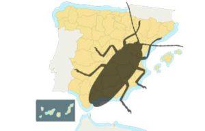 cucarachas es la plaga más numerosa en España