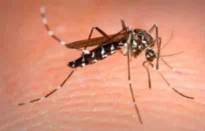 mosquito tigre sobre la piel humana